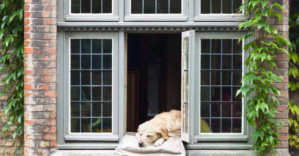 dog sleeping by the window